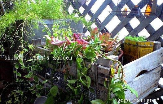 Shihobis_garden