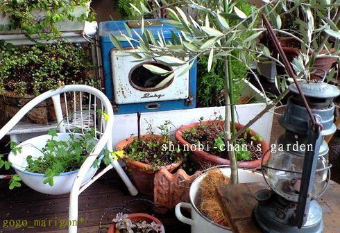 Shihobis_garden2