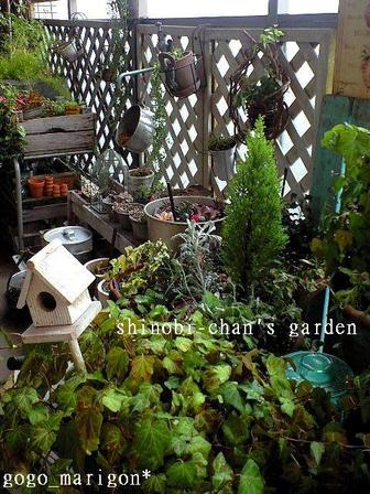 Shihobis_garden3_2