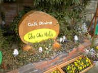 Cha_cha_malu_1